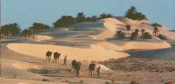 Tilouche_Wüste